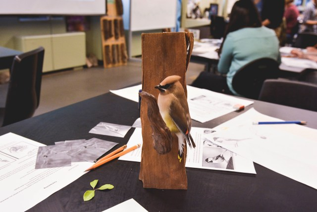 Props were used to practice nature sketching. Photo by Ju Hyun Kim