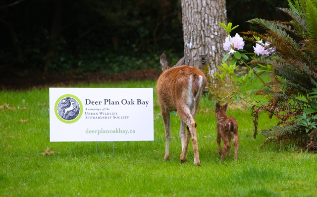 What to do When Encountering a Deer