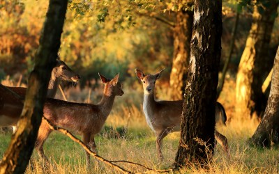 Safe Deer Interactions in the Fall