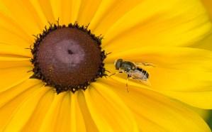 Wanna Bee