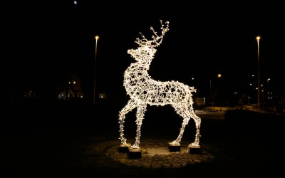 The Mythology & Symbolism of Deer