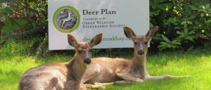 deer-sign-cropped