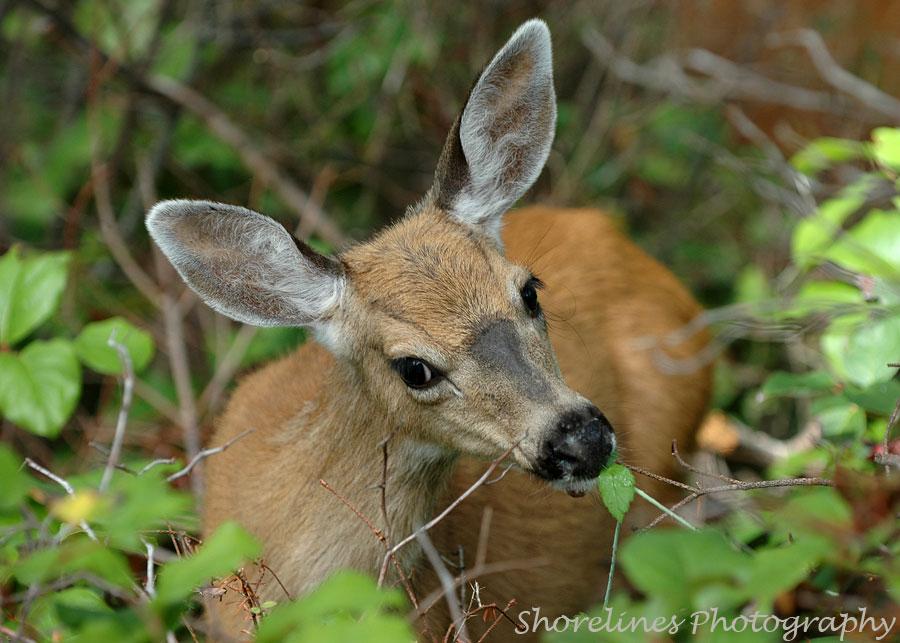 Wildlife Biologist Speaks Up