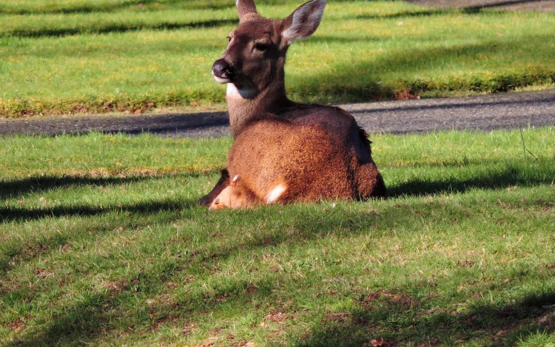 Update on Deer Tagging Project