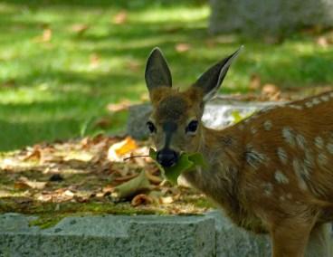 #17 - Susan Henderson - Ross Bay Cemetery
