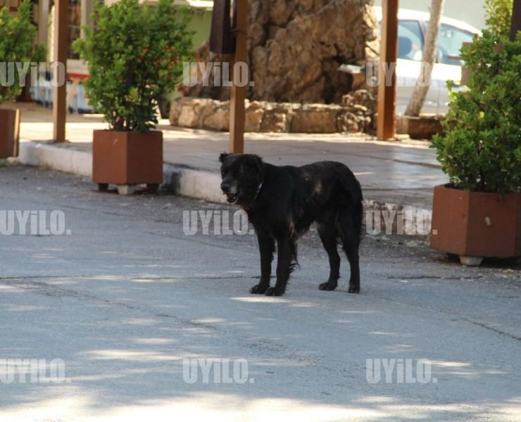Black Dog on the Street