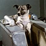 Uzay'a Giden Köpekler