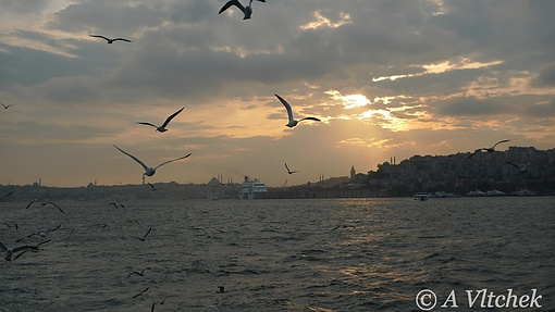 seaguls over Bosphorus, Turkey