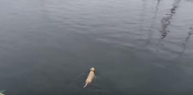 Этот пес бросается в океан каждый день, чтобы встретить своего тайного друга