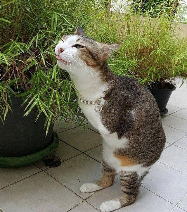 Кот без лапок научился ходить как кенгуру! Учитесь оптимизму у любимца Интернета!