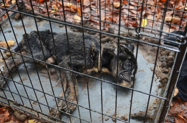 Все были уверенны, что эта собачка умрет! Но нашелся человек, который поверил в нее! Невероятная история!