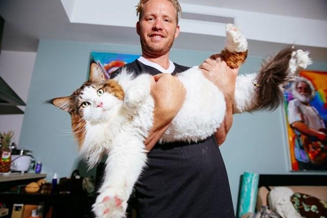 Такого кота вы еще не видели