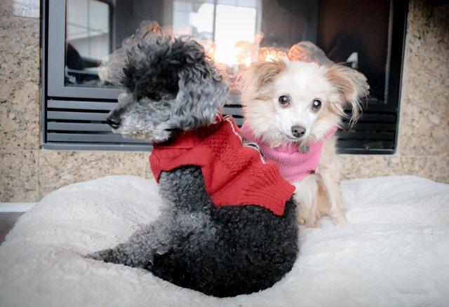 Ветеринар отказался усыплять старую, но здоровую собаку, вместо этого сделав то, что заслуживает уважения
