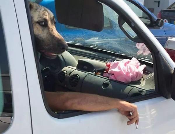 15 убойных фото собак, которые оказались в нужном месте и в нужное время