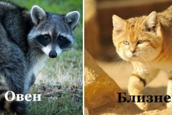 Вот с каким хищным животным можно сравнить женщин разных знаков Зодиака