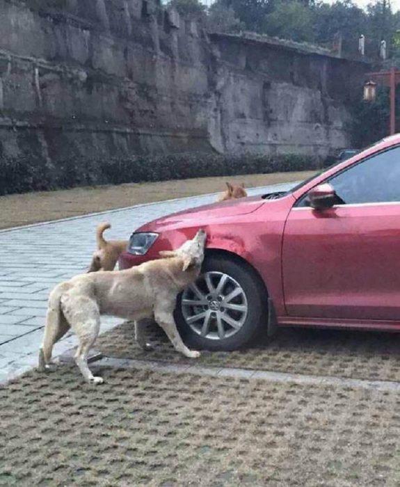 Выходя из машины, он пнул бродячего пса. Но когда вернулся, то застыл на месте…