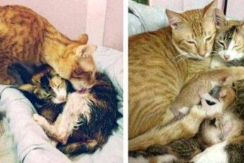 Этот папа кот присутствовал на родах. Посмотрите на его невероятную реакцию при появлении котят