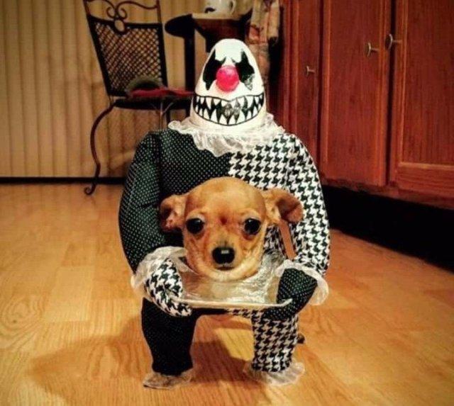 ТОП-20 самых забавных фото животных этой недели