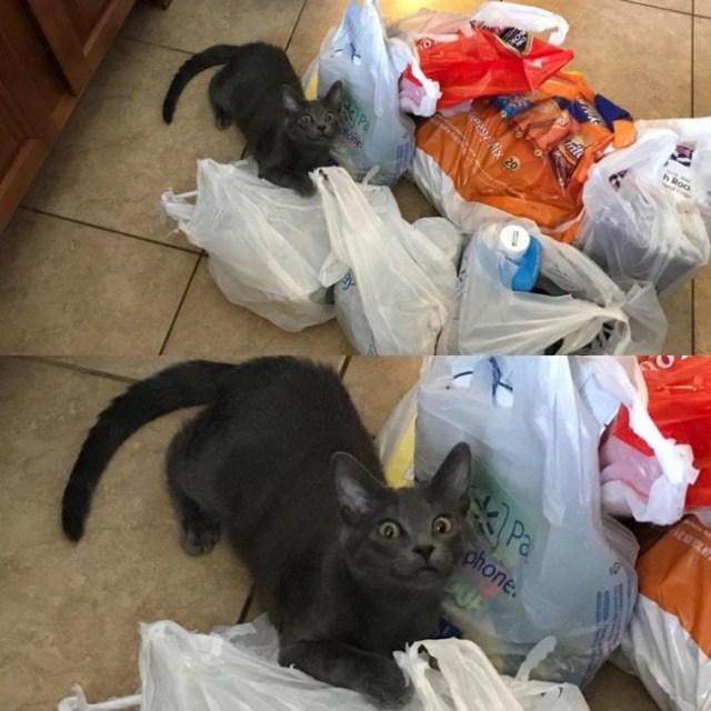 15 отменных фотографий, способных раскрыть всю суть котов