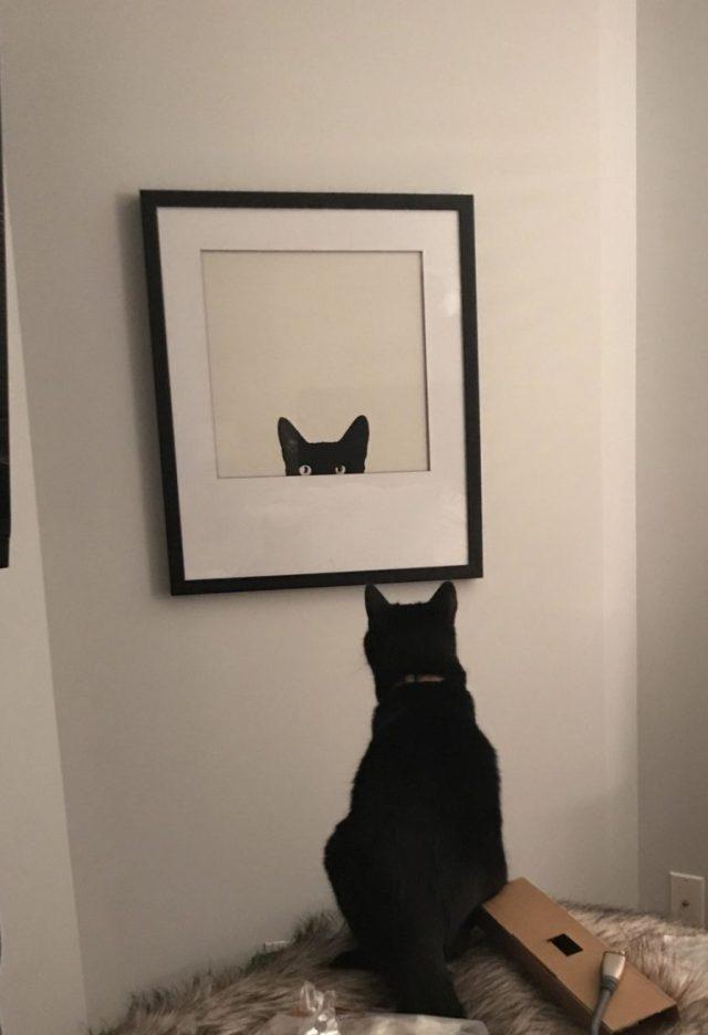 Почему все обожают котов? Ответ дан в этих 15 фотографиях!