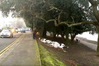 Этот мужчина ежедневно кормит птиц, посмотрите, что случилось, когда он опоздал!
