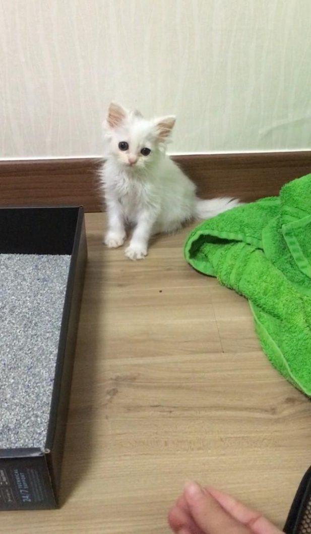 Маленький белый котенок умирал от истощения на витрине зоомагазина