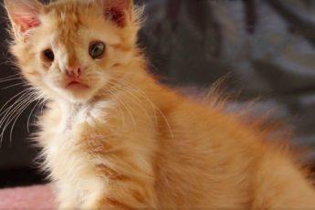 Самый некрасивый котенок все же нашел того, кто его смог полюбить