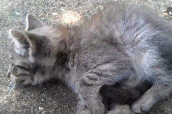 Люди равнодушно проходили мимо брошенного больного котенка, но одна девушка решила ему помочь