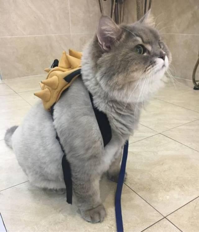 Bone Bone — огромный пушистый кот из Таиланда, покоривший своим нереальным видом весь Instagram