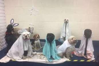 Рождественский вертеп: сюрприз от щенков