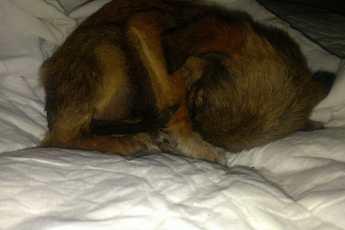 Женщины нашли щенка на обочине дроги, который был похож на комочек шерсти
