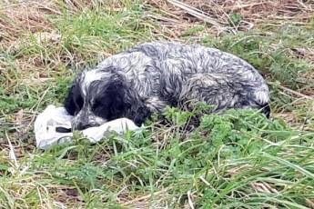 Мужчина спас собаку, которая держала пакет в зубах