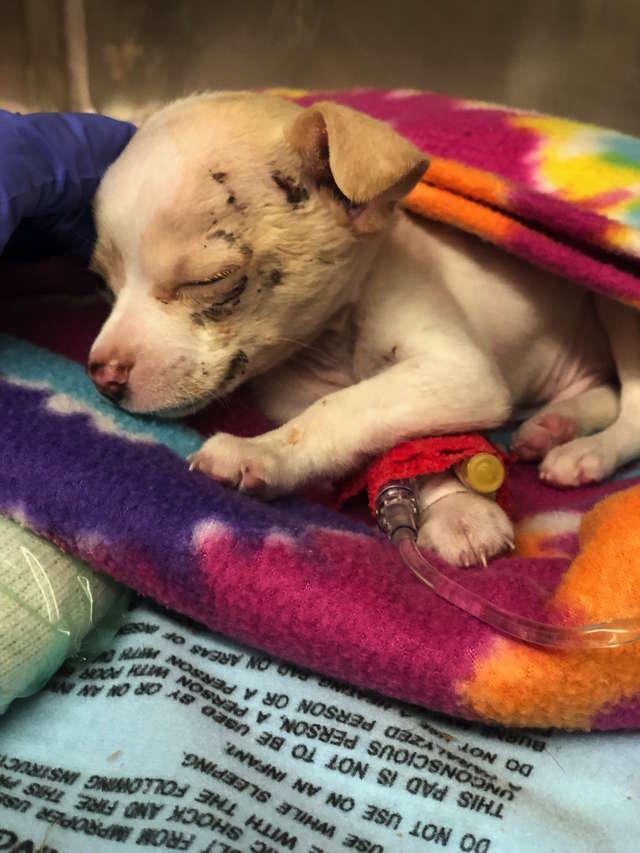 Крошечный беспризорный щенок упал с неба - и каким-то образом выжил