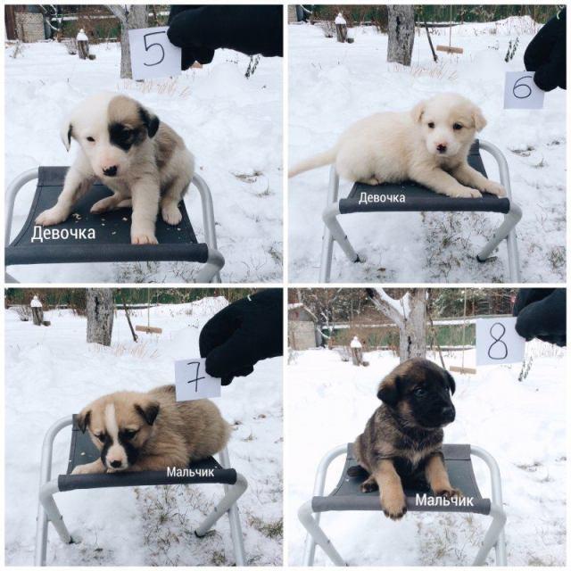 Мужчина нашел 20 брошенных щенков, которые чуть не замерзли в лесу от холода