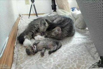 Котёнок родился на 4 дня позже остальных и мама осталась для крохи самым близким другом
