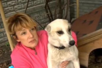 Несчастную собаку бросили в воду, привязав ей на шею мешок с щенками