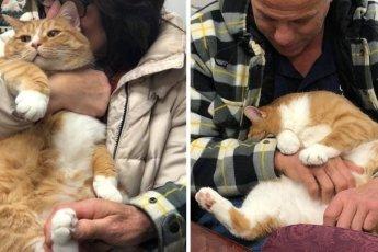 Кота сдали в приют из-за его любви сидеть на коленях хозяина