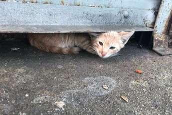 Напуганный кот неделями не вылезал из своего укрытия на улице