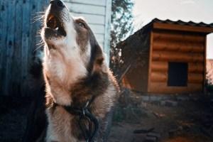 Как себя вести при нападении собаки: 5 рекомендаций