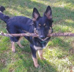 Как преданный пес спас мне жизнь