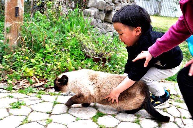 西海市大島町カフェ&菓子工房ひこばえの看板猫オッチョと遊ぶ子供