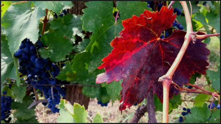 Винный завод Грузвино (Geowine) - главная компания по производству вин в Восточной Грузии