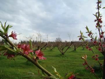 Кахетия - регион старинных традиций и самых вкусных вин Грузии