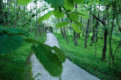 Куда Иванишвили перевозил деревья - новый парк открылся на побережье Грузии - фото