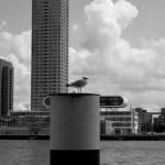 Waterfront of Rotterdam