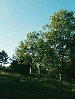 Screenshot_2015-06-05-23-21-36 (1)