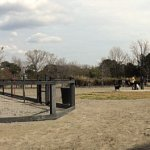 Governors Park dog park panorama