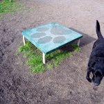 Dog Platform