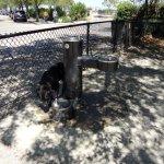 Hazel Parker dog park