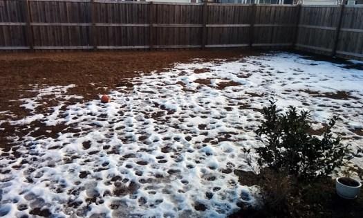 Back yard Snowpocalypse 2018 remnants